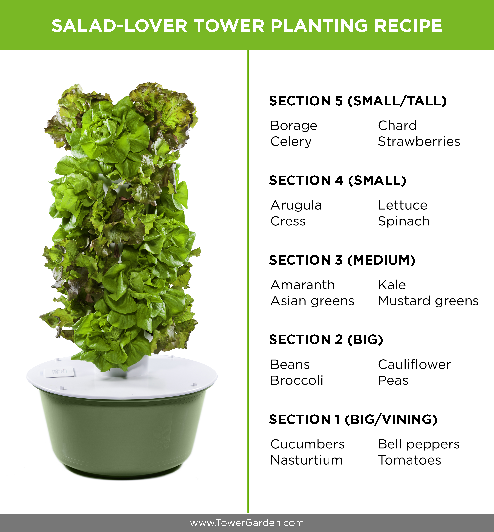 How to Grow Your Own Sensational Salads